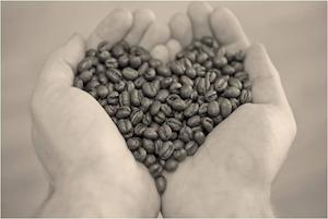 nachhaltiger-kaffeeanbau